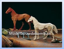 Jong Paard