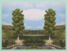 Berkenboom 20 cm