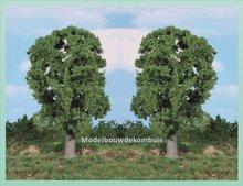 1 Eikenboom
