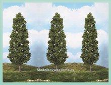 1 Beukenboom