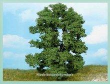 1 Essenboom