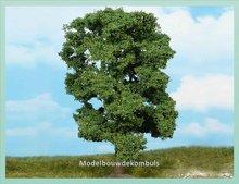 1 Lindenboom