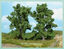 2 Essenbomen