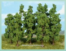 10 Beukenbomen