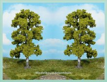 1 Berkenboom