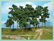 5 Pijnbomen