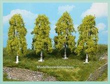 4 Berkenbomen