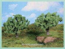 2 Olijfbomen