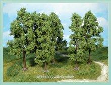 6 Beukenbomen