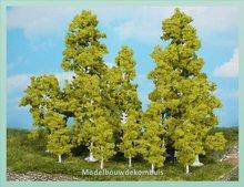 6 Berkenbomen
