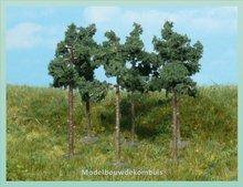 6 Dennenbomen