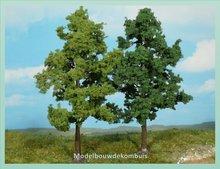 2 Beukenbomen