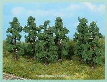 6 Perenbomen