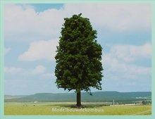1 Loofboom 35 cm