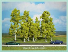 10 Berkenbomen