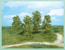 Natuur Bomen Midgroen