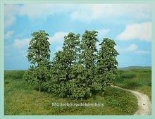 Donkergroen Natuur Bomen