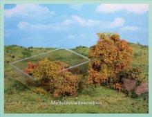 Herfst Struiken Bomen