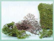 15 Bomen 2-6 cm