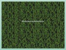 Donker Groen Gebladerte
