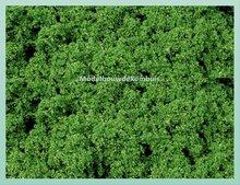 Midden Groen Gebladerte
